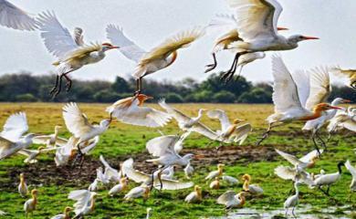Top 10 Bird Sanctuaries of India