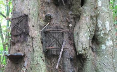 The Tree Where Infant Babies are Buried