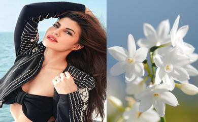 Beautiful Jasmine Flower Will Give You Jacqueline Like Skin