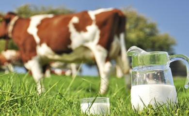 Drinking Raw Milk Treats Allergies. Read More Benefits