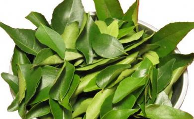Your Food Essential Curry Leaves Helps Improving Hair and Skin