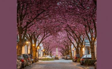 5 Beautiful Streets to Walk in London