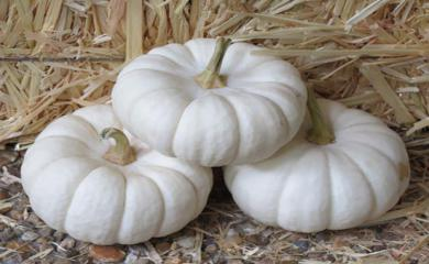 White Pumpkin Will Help Enhance Immune System