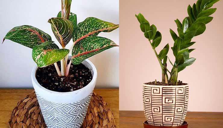 5 Indoor Plants That Are Low Maintenance