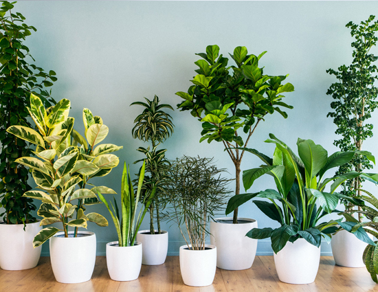 Bringing Nature Inside With House Plants   Jess Soothill