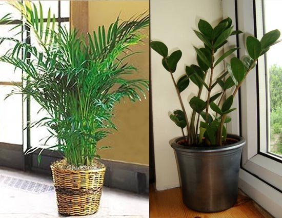 4 indoor plants for dark rooms - Indoor colorful plants ...