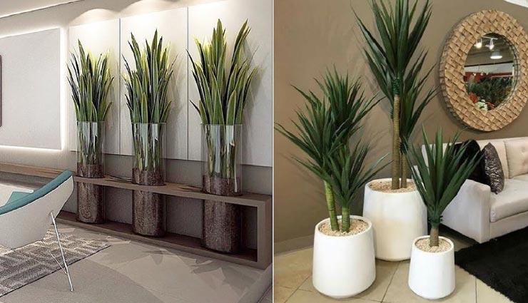 decoration tips,decoration tips in hindi,indoor plants,interior decoration ,डेकोरेशन टिप्स, डेकोरेशन टिप्स हिंदी में, इंटीरियर डेकोरेशन, प्लांट्स डेकोरेशन