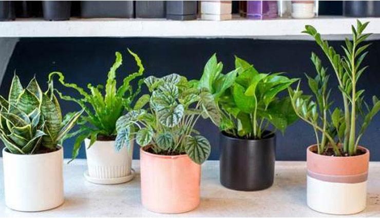 ये 5 पौधें करेंगे वायु प्रदूषण से आपकी रक्षा, आज ही लगाएं घर में