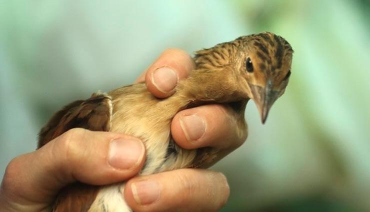 injured bird,astrology tips ,ज्योतिष उपाय, ज्योतिष उपाय हिंदी में, दुर्घटना के संकेत, अशुभ संकेत, अपशगुन