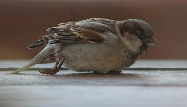 घर में पक्षी का घायल होकर गिरना देता है दुर्घटना का संकेत, जानें प्रकृति के कुछ और अपशगुन के बारे में