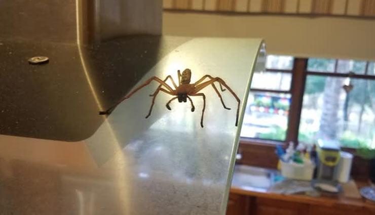 अपने घर को रखे बिमारियों से दूर, इन टिप्स की मदद से रसोई में घूम रहे कीड़ों से पाएं छुटकारा