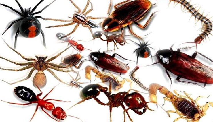 household tips,insects of home,mouse,mosquitoes,lizard,house safety ,कीड़े, जानवर, चूहा, छिपकली, कॉकरोच, मच्छर, खटमल, जानवरों से छुटकारा, रख-रखाव, घर की सफाई