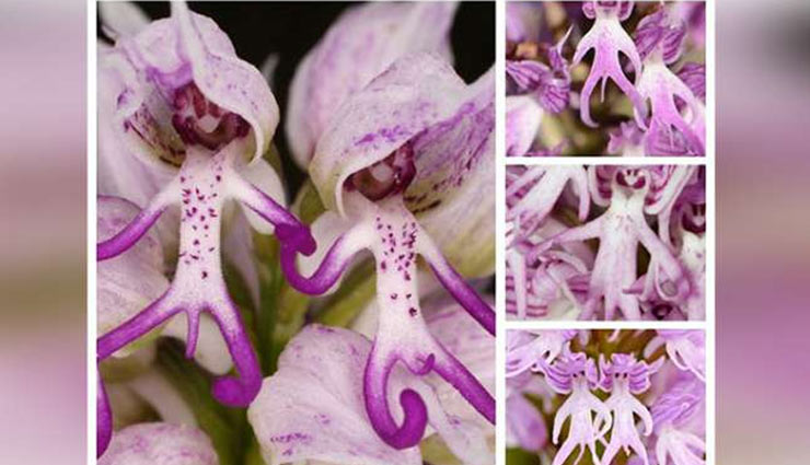 weird plants,weird stories,tropical pitcher plant,italian plant,monkey plant,loofah ,अजब गजब खबरें