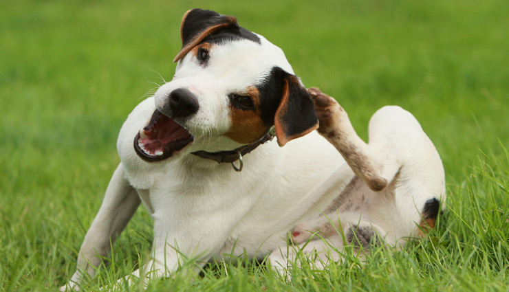 10 Home Remedies To Get Rid of Itchy Skin Among Dog