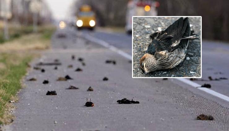 jatinga bird suicides,mystery of the jatinga bird suicides,jatinga,weird stories