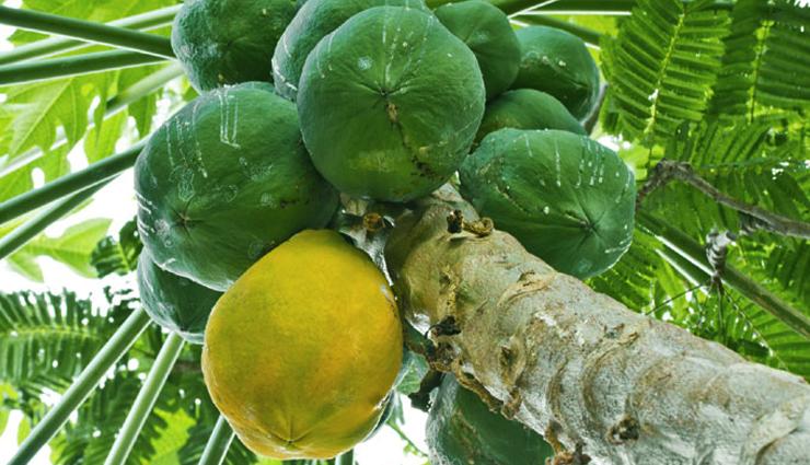 healthy benefits of raw papaya,health benefits in hindi,raw papaya