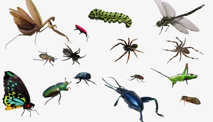 घर में फ़ैल रखा है छोटे-छोटे कीड़ों का आतंक, निपटे इन तरीकों से