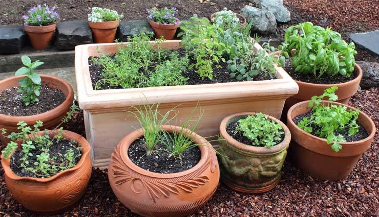 इन 5 पौधों से सजाए अपना किचन गार्डन, शुद्ध हवा के साथ सुंदरता