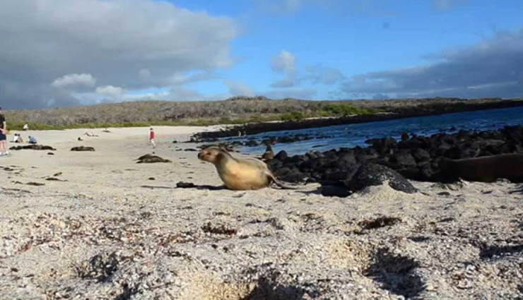 galapagos,tourist destinations in galapagos,kicker rock tour,reserva el chato,las loberias,las tintoreras,charles darwin research center,tourist places,holidays,travel