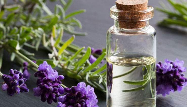 lavender oil,lavender oil for hair growth,hair care tips,hair growth tips,beauty tips,skin care tips,benefits of lavender oil