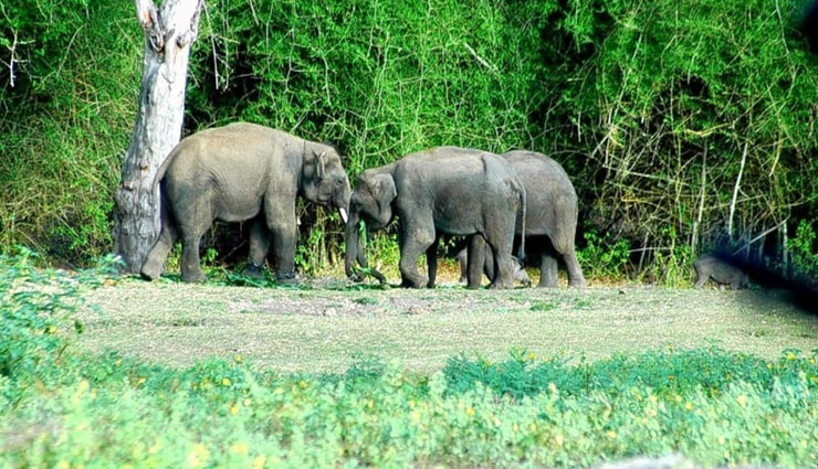 least explored wildlife sanctuaries,wildlife sanctuaries in india,pobitora wildlife sanctuary,assam,bornadi wildlife sanctuary,dibang wildlife sanctuary,arunachal pradesh,mitiyala wildlife sanctuary,gujarat,kibber wildlife sanctuary,himachal pradesh