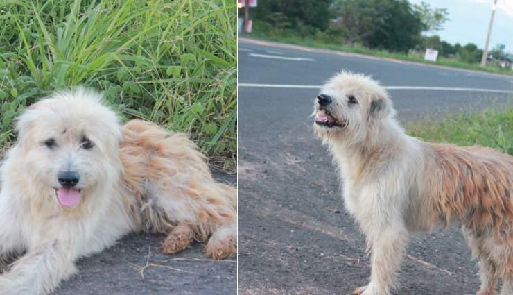 कुत्ते का मालिक के प्रति प्यार, 4 साल तक करता रहा एक ही जगह इंतजार