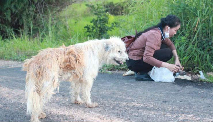 thailand,leo,wired story,lost dog ,अजब गजब,हटके,अनोखा मामला