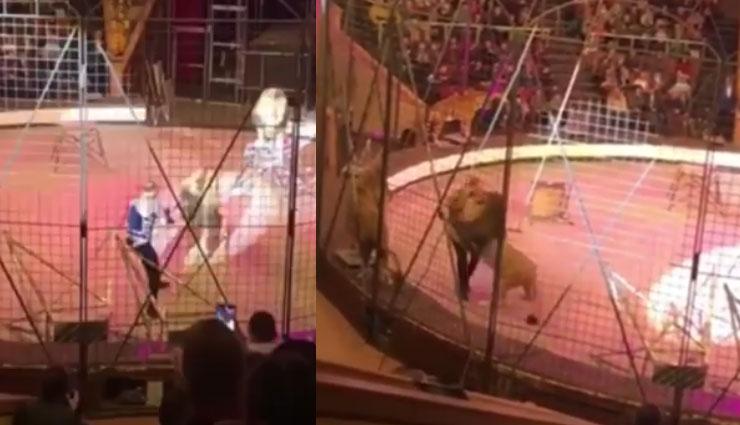 सर्कस में ट्रेनर पर जब शेर ने कर दिया हमला, रुक गई देखने वालों की सांसे, देखे वीडियो