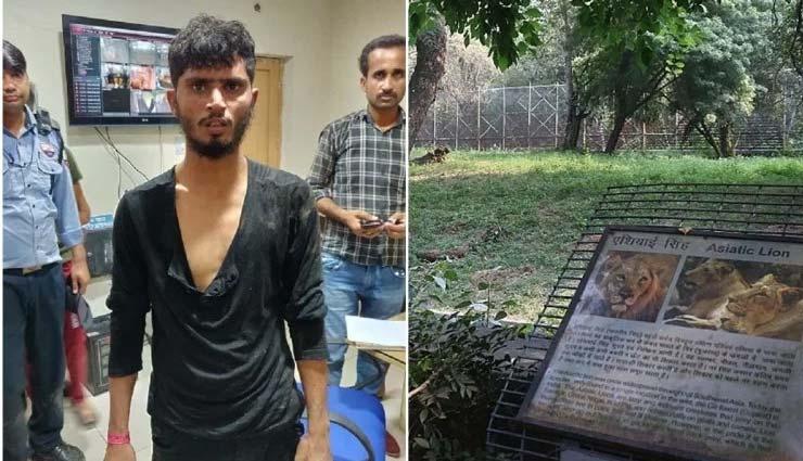 चिड़ियाघर के कर्मचारियों का खुलासा, आखिर क्यों बाड़े में कूदे युवक पर शेर ने नहीं किया हमला?