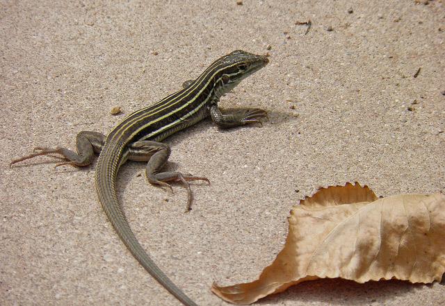lizards from house,get rid of lizards ,छिपकली, छिपकली के उपाय, छिपकली से छुटकारा, घरेलू उपाय, छिपकली का आतंक