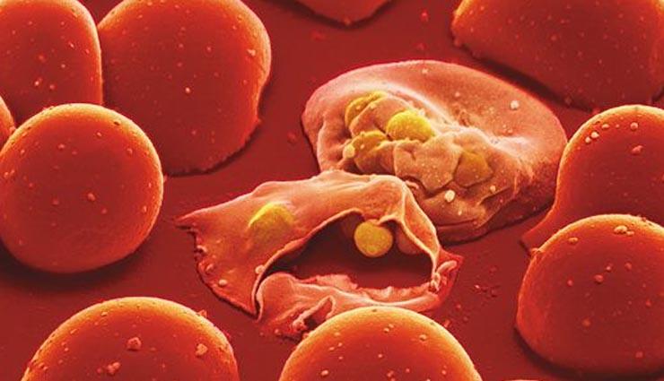 आइए जानें प्राकृतिक रूप से मलेरिया का इलाज कैसे किया जा सकता है...