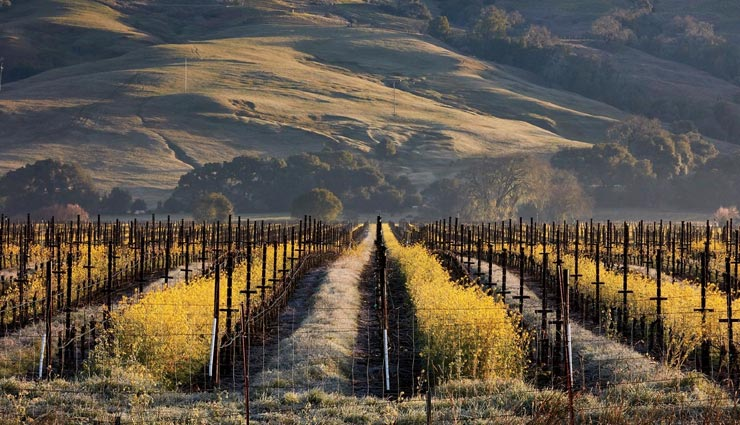 tourist places,foreign tourist places,places for wine lovers,famous foreign places,california places ,पर्यटन स्थल, विदेश पर्यटन स्थल, वाइन के शौकीन लोगों के लिए पर्यटन स्थल, कैलिफोर्निया की मशहूर जगह