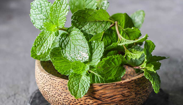 herbs you can grow indoors,household tips,herbs you can grow indoors year round,herbs you can grow indoors in winter,herbs you can grow indoors in water,herb plants you can grow indoors,herbs which can be grown indoors,list of herbs you can grow indoors,herbs that you can grow indoors,what herbs can you grow indoors