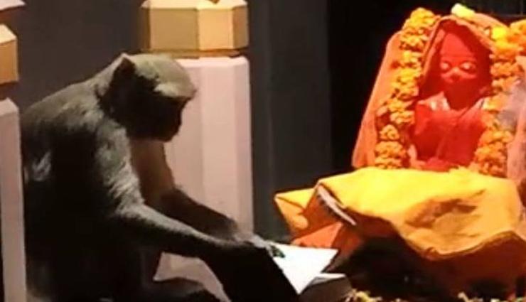 सुंदर कांड पाठ के दौरान हनुमानजी के मंदिर में 'रामायण' पढ़ने लगा बंदर