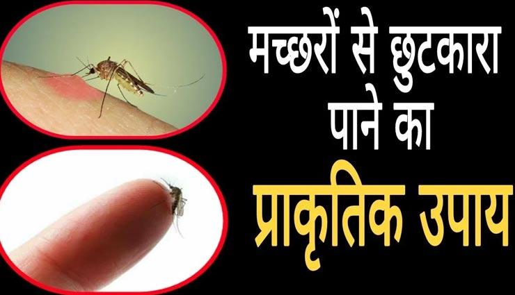 ये प्राकृतिक उपाय दिलाएंगे मच्छरों से निजात, बचेंगे गंभीर बीमारियों से