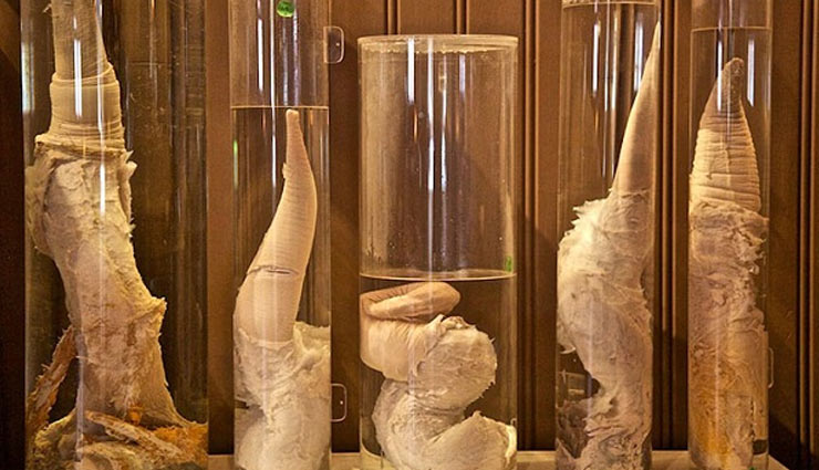 penis museum,weird story ,पेनिस म्यूजियम