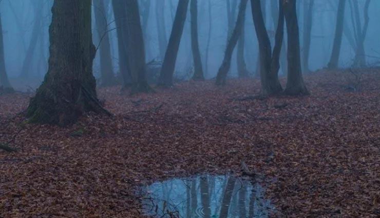 weird news,weird place,mysterious forest,hoia baciu transylvania ,अनोखी खबर, अनोखी जगह, डरावने जंगल, रहस्यमयी जंगल, होया बस्यू जंगल