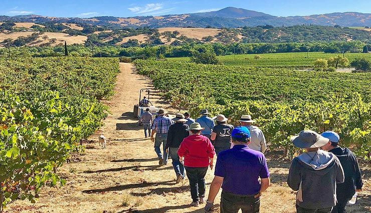 अगर आप भी है वाइन के शौकीन, बनाए कैलिफोर्निया की इन 5 मशहूर जगहों पर घूमने का प्लान