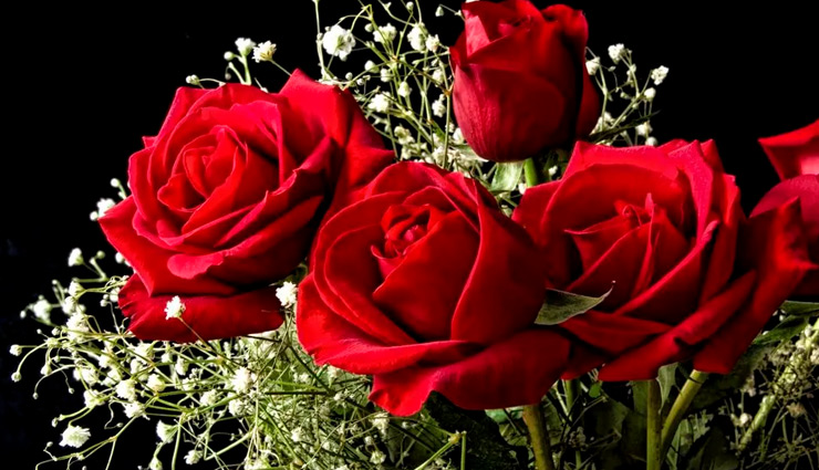 Valentines 2019- Here is Meaning of Number of Roses You are About to Gift
