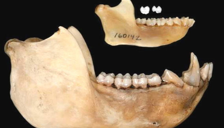 केन्या : 42 लाख साल पुराने सबसे छोटे बंदर के जीवाश्म मिले, वजन होता था सिर्फ 1 किलोग्राम