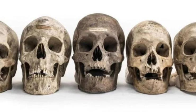 weird story,weird news,human skull,online sell of human skull,human skull selling in united kingdom ,अनोखी खबर, अनोखी न्यूज़, इंसान की खोपड़ी, इंसान की खोपड़ी की ऑनलाइन बिक्री, खोपड़ी की ऑनलाइन बिक्री यूनाइटेड किंगडम में