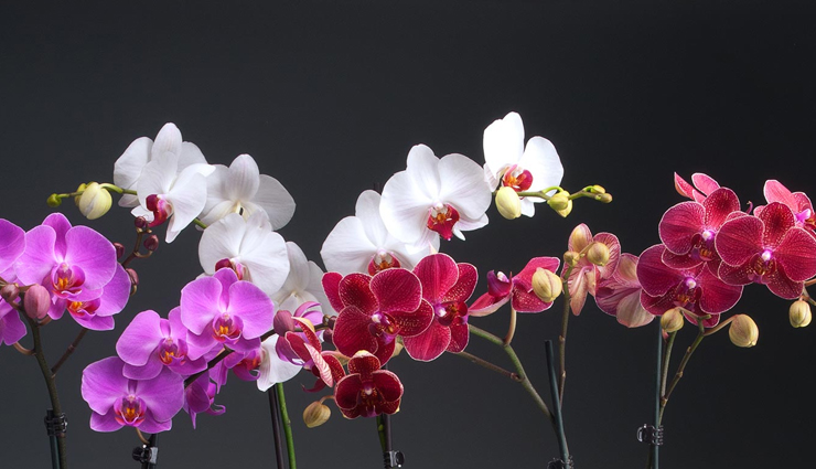 flowers,7 flowers whose beauty is amazing,most beautiful flowers around the world,amazing beautiful flowers,orchids,daffodils,dahlia,gladioli,carnations,apple blossom,peony