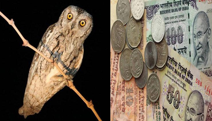 astrolgy tips,owls signs,money signs ,उल्लू, उल्लू के संकेत, धन के संकेत, ज्योतिष टिप्स