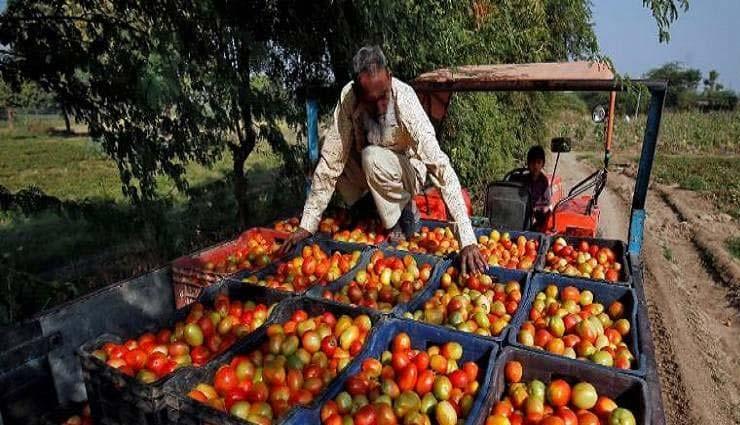 Article 370 : पाकिस्तान की बौखलाहट नतीजा 300 रुपये किलो पहुंचे टमाटर के दाम!