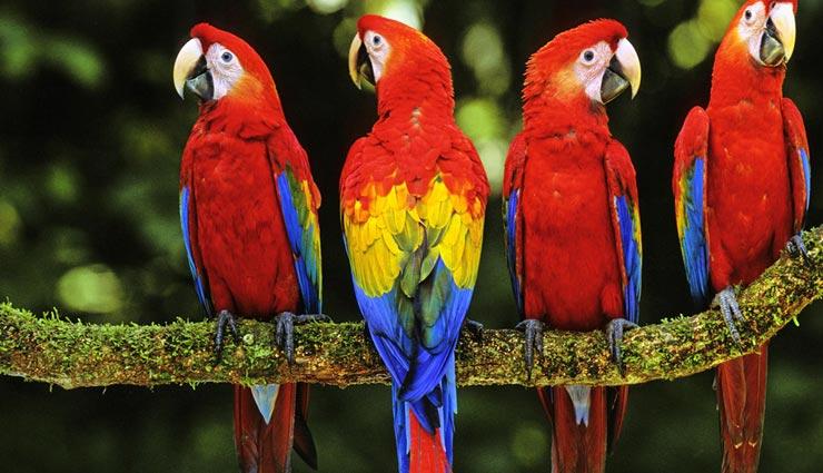 interesting facts,amazing facts,facts related birds,birds nature ,रोचक तथ्य, मजेदार तथ्य, पक्षियों के रोचक तथ्य, पक्षियों का स्वभाव