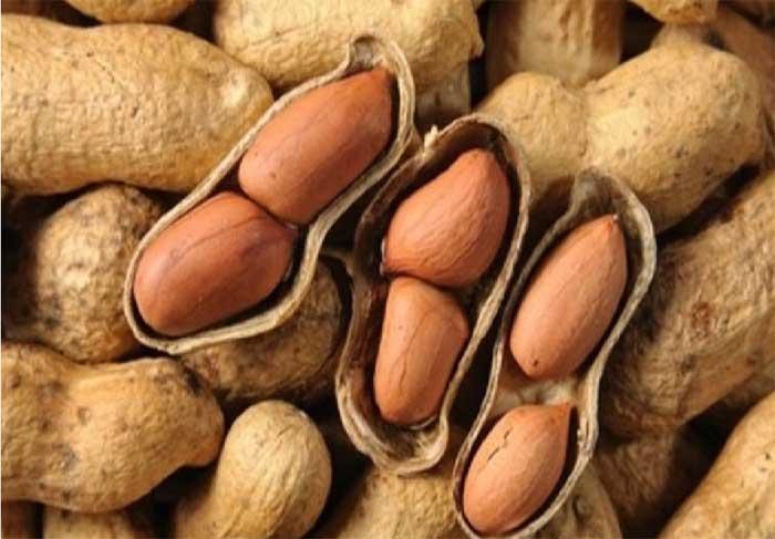 peanut,peanut benefits,peanut health benefits,Health,health benefits,Health tips,simple health tips ,मूंगफली,मूंगफली के फायदे,मूंगफली का सेवन,हेल्थ