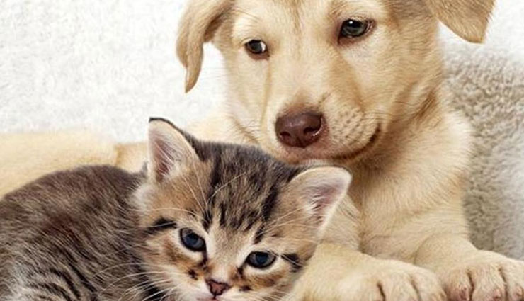 Know Which Pet To Adopt According To Your Zodiac Sign