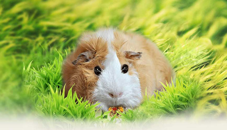 pet animal according to zodiac sign,astrology tips,pet animal to adopt,adopting animal astrology tips