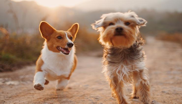 शायद ही जानते होंगे आप कुत्तों से जुड़ी ये रोचक बातें, कुछ तो आपको चौंका देगी