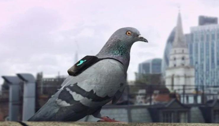 weird news,weird incident,fir against pigeon ,अनोखी खबर, अनोखा मामला, कबूतर के खिलाफ एफआईआर